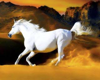 Caballo blanco en el desierto