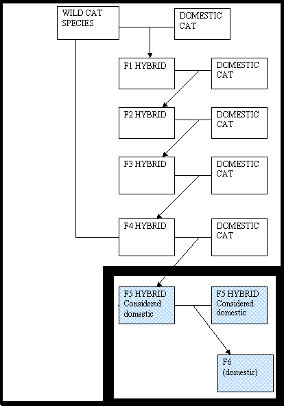 Savannah Breeding Reproduction Chart