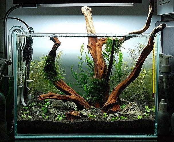 Trend home interior design 2011 aquascape mini style design inspired - Design aquasacpe ...