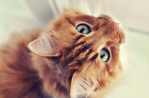 Best Cleaning & Moving Tips When Having Cats in Your Home