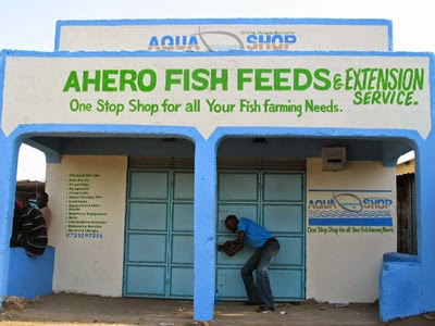 http://www.eadt.co.uk/news/video_gallery_kenyan_farmers_trained_to_take_advantage_of_soaring_demand_for_fish_1_3862453