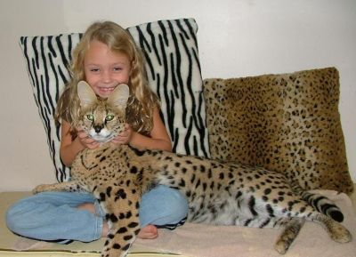 [Image: savannah-cat-breed5.jpg]
