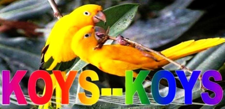 KOYS-KOYS