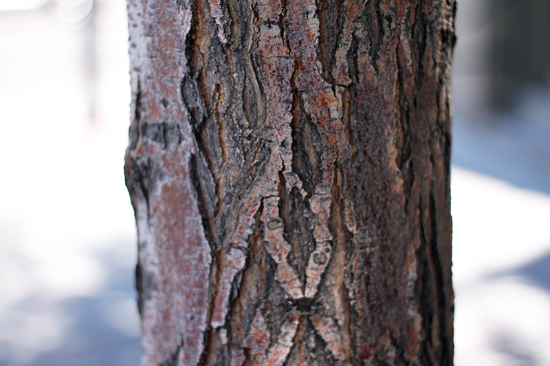 tree trunk and bark close up