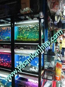 Pasar Ikan Hias Di Denpasar Bali