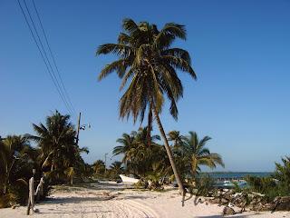 paysages du Mexique Sian Ka'an plage cocotier blog photos voyage yucatan