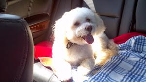 Robbie likes his car rides