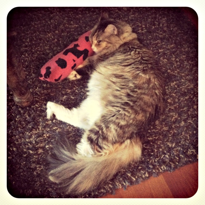 The Holland House: Katie snuggles toy