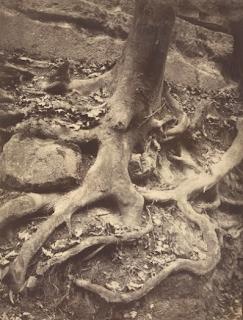Trois racines, Saint-Cloud (1906) par Eugène Atge