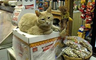 Kucing Menjabat Sebagai Walikota