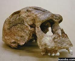 About Meganthropus Paleojavanicus