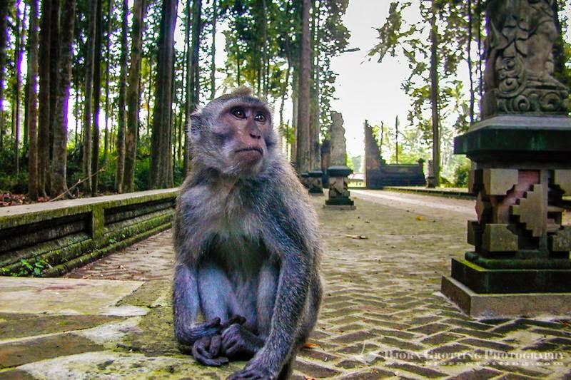 Tempat Wisata Pilihan Sangeh Bali