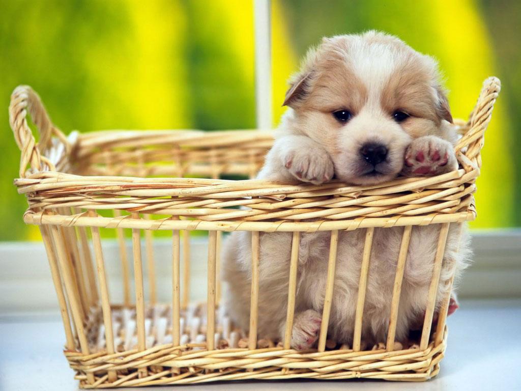 http://2.bp.blogspot.com/-bhA7UISP4Wo/TlfHe1TuFdI/AAAAAAAACVo/pFkQZuXK1uw/s1600/filhote-cachorros-lindos-Not1.jpg