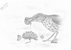 ARTIGO NA WILDER: Tordo-pinto