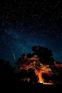 Раскидистое дерево под звездным небом