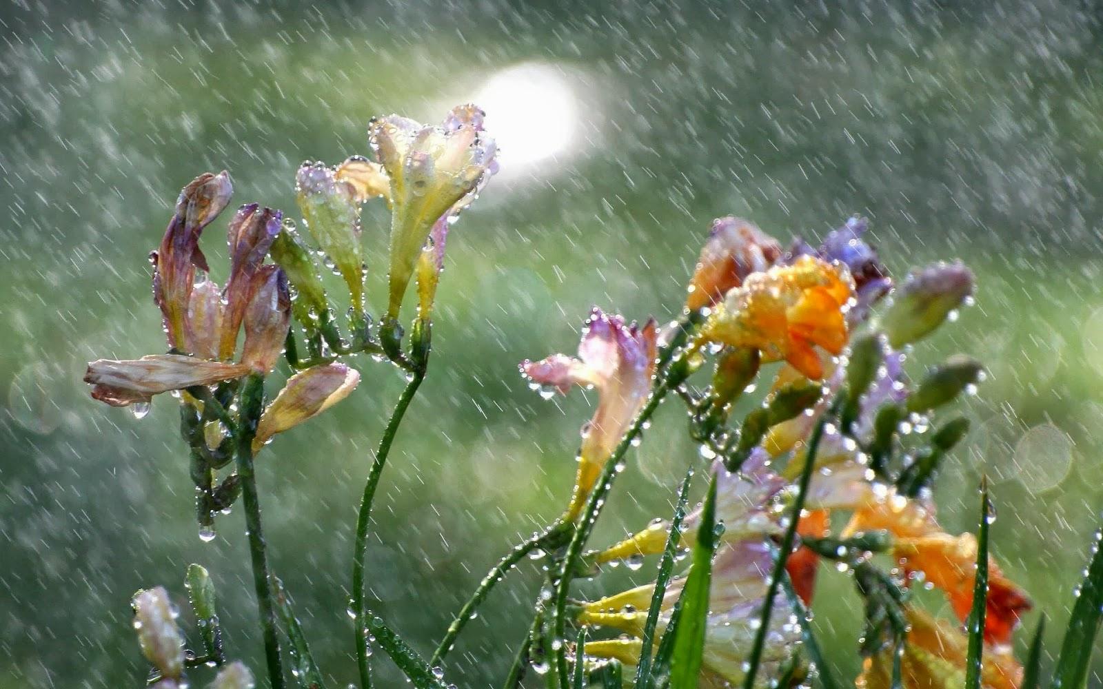 Открытки с летним дождем