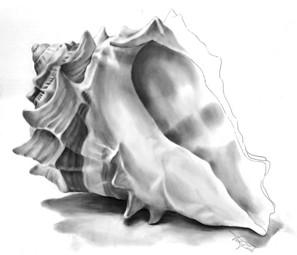 Creating with Kaiser: Sketching Shells