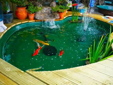 Membuat Kolam Ikan Hias di Dalam Rumah