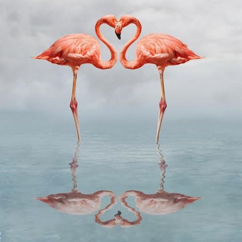 Flamingo500.jpg