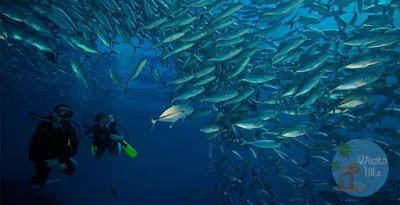 Selami Dasar Laut di Tulamben Bali