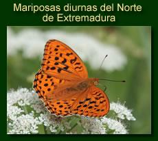 http://iberian-nature.blogspot.com.es/p/ruta-tematica-mariposas-diurnas-del.html