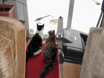 cats watching birds