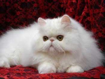 Tips Memelihara Kucing