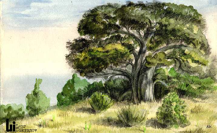 Crimea Juniper Tree Art