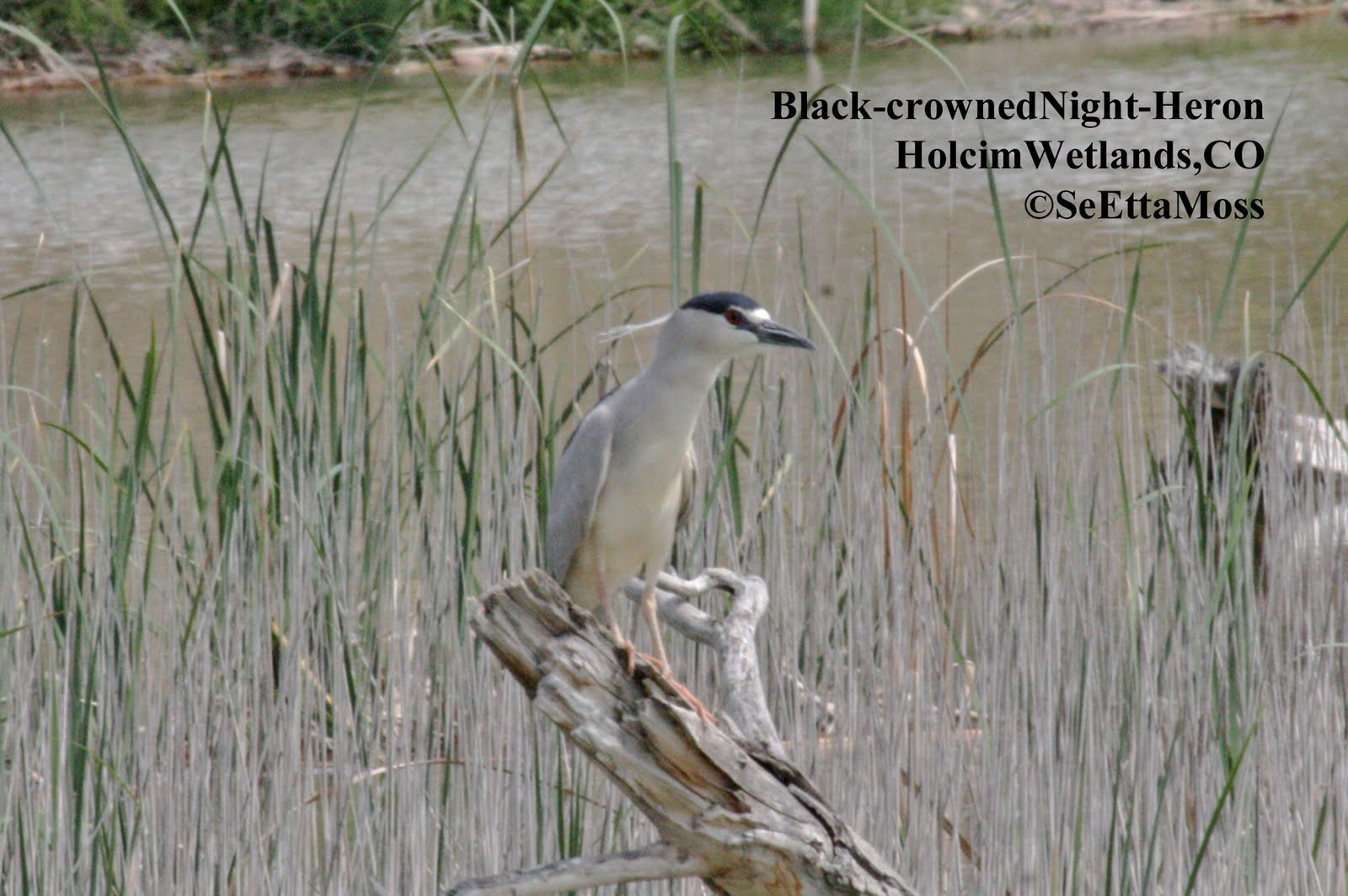 BCNHeron a2 HolcimWet Related topics: shrunken head, shrunken heads, head, heads, wife, wives, ...