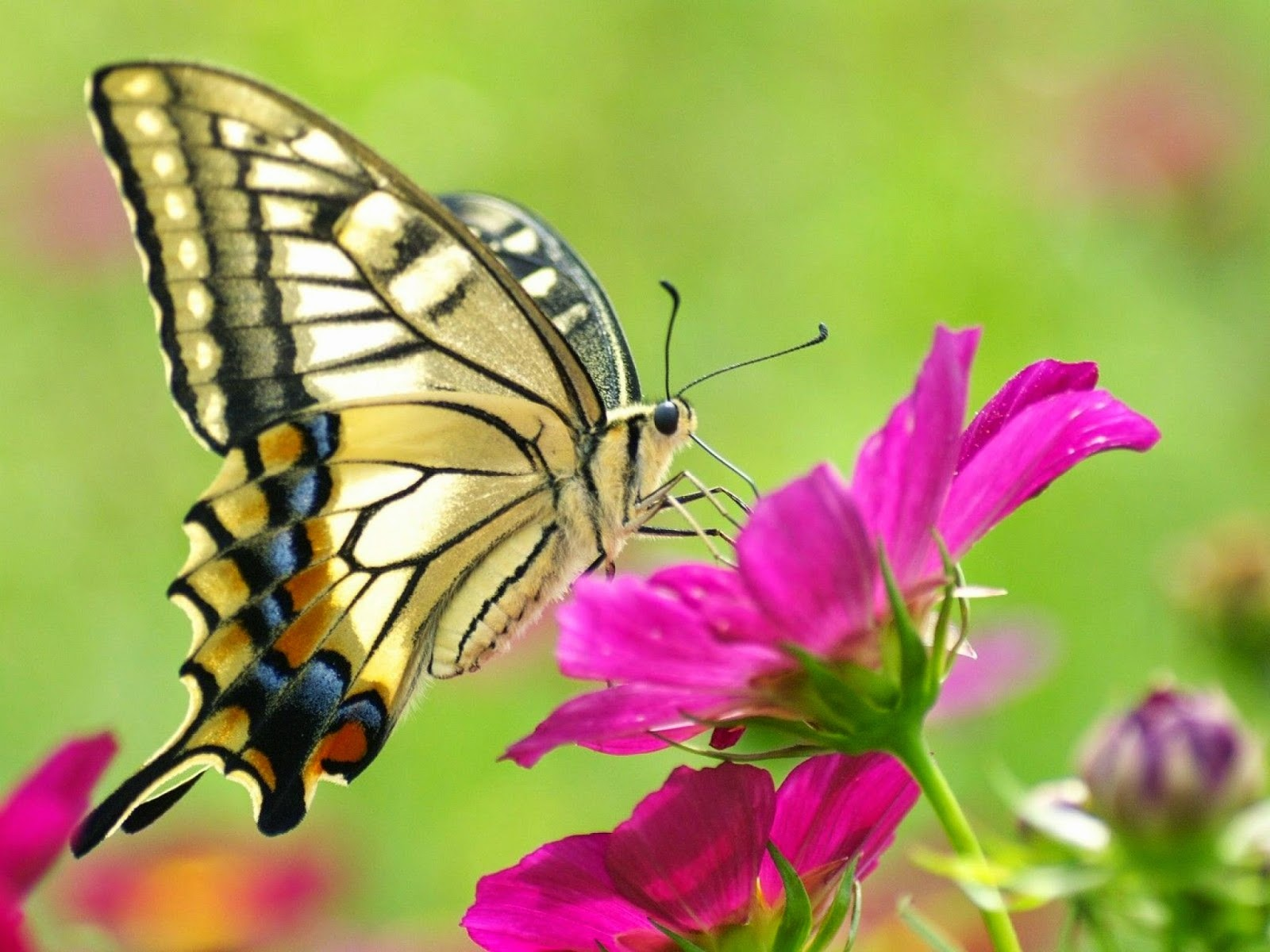 live free tv sexleketøy butterfly