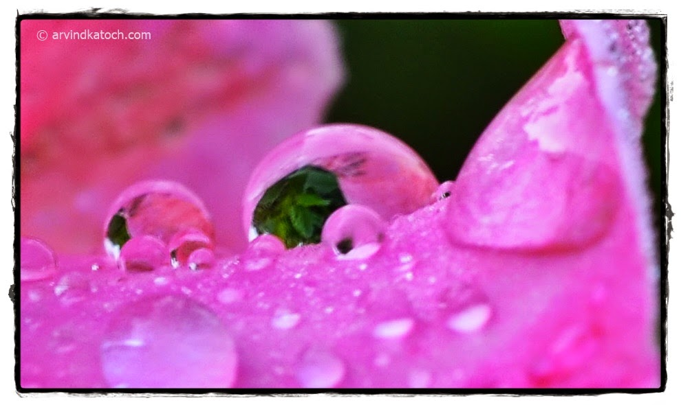 Rain Drop, Eye, Reflection, Rose,