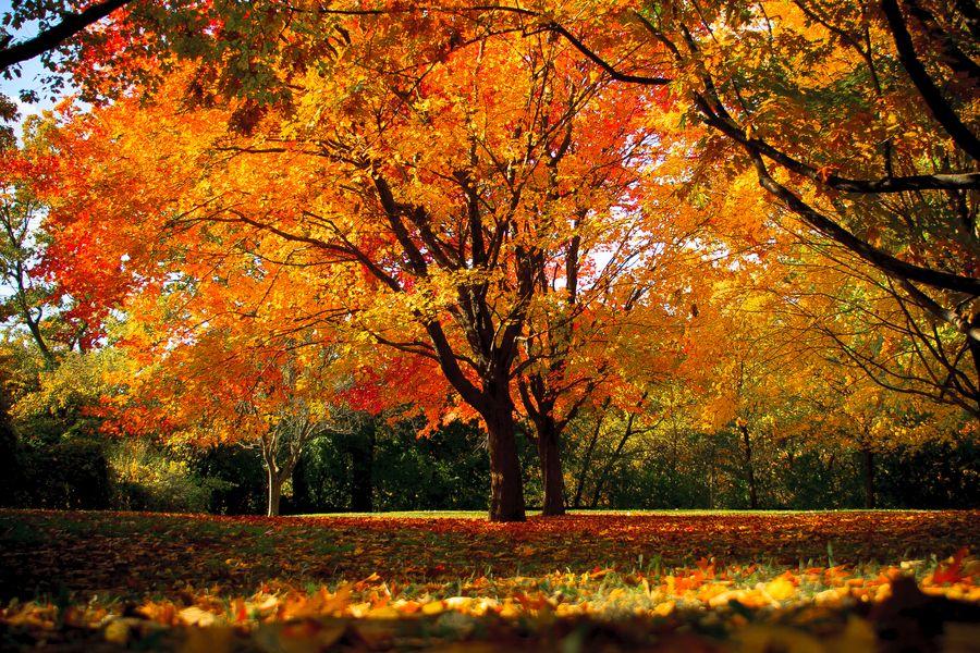 11. Fall tree by Nazar Zhovnirchyk