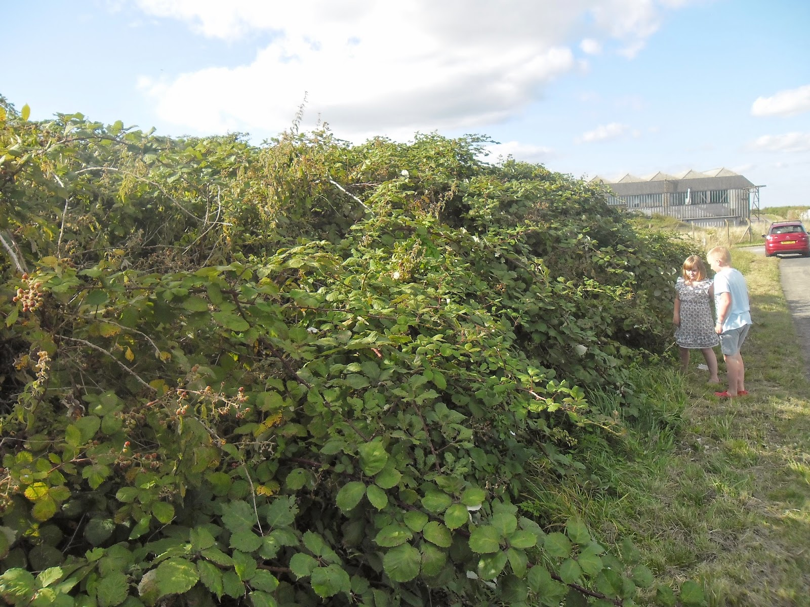 does anyone know of any larger bramble bushes elsewhere