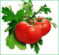 Manfaat dan Khasiat Buah Tomat