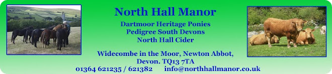 Dartmoor Ponies - North Hall manor