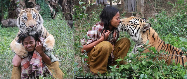indonesian man lives with tiger