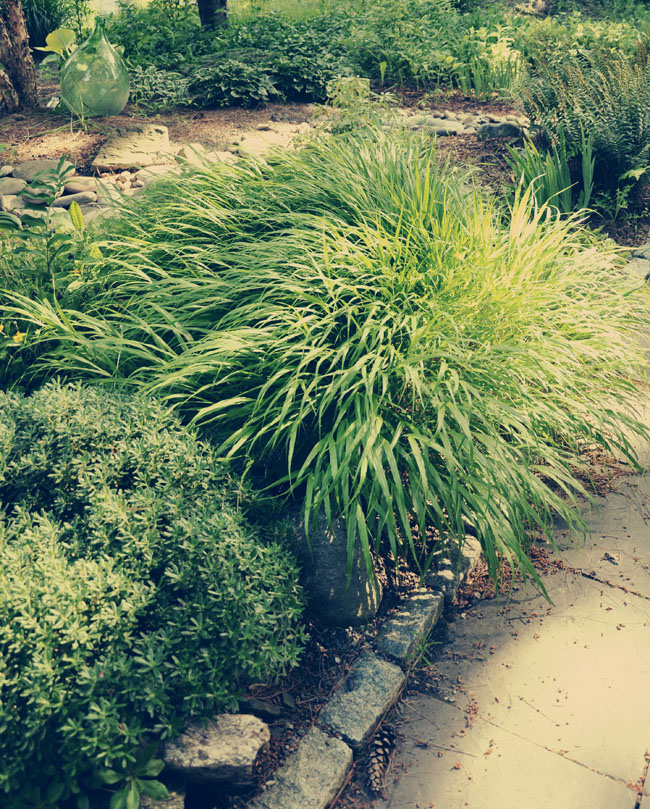 Growing with plants propagating hakonechloa and a new for Planting schemes with grasses