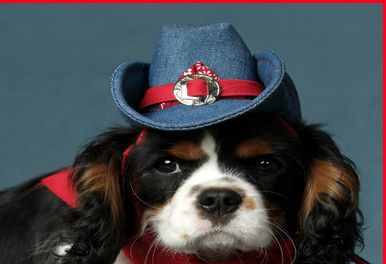 Me divierten mucho los sombreros para perros. K9 Kool Hats es una firma  que 6a74db2de5c