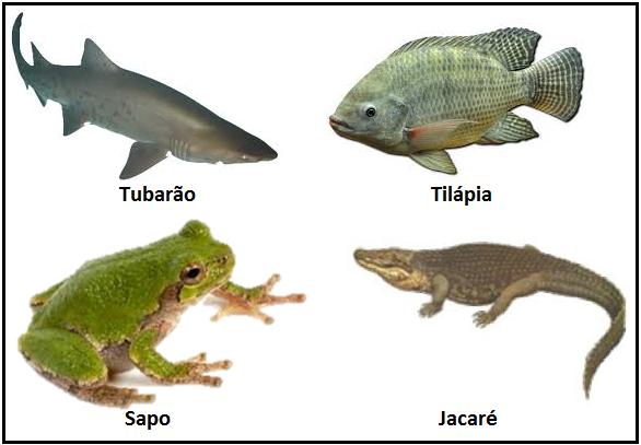 biouai atividade de revisão para prova 7º ano peixes anfíbios