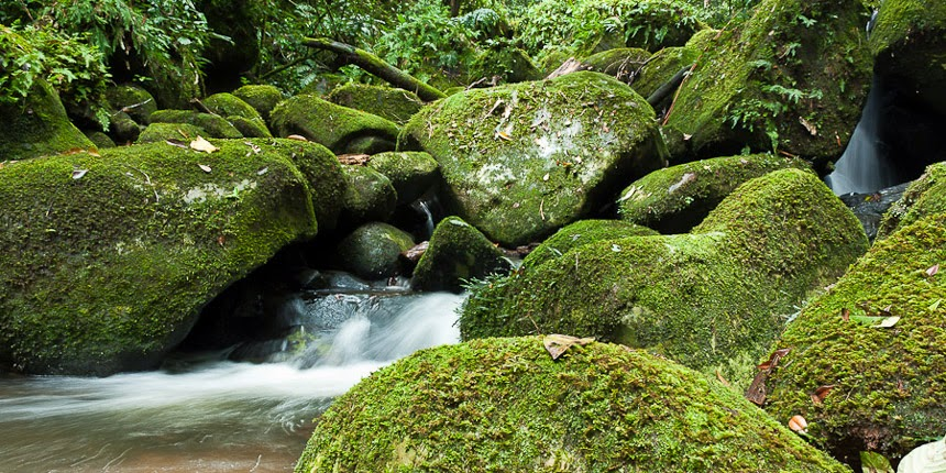 small creek in the Bahau Hulu forest, East Kalimantan, Indonesia