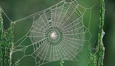 Como as aranhas constroem suas teias?