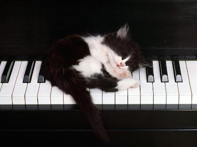 Gato en Piano El Gato del Gato en la Terraza de Fernando Daniel Bruno Partitura de Piano y Voz Canción de Folklore Argentino