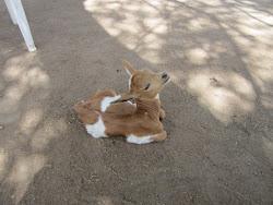 Kid goat?