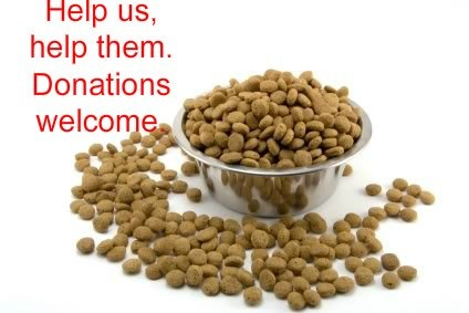 Donate Canned Dog Food