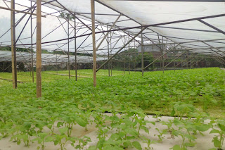 greenhouse hidroponik