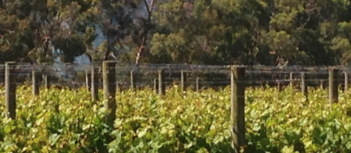 Merlot in Australia; maligned or misunderstood?