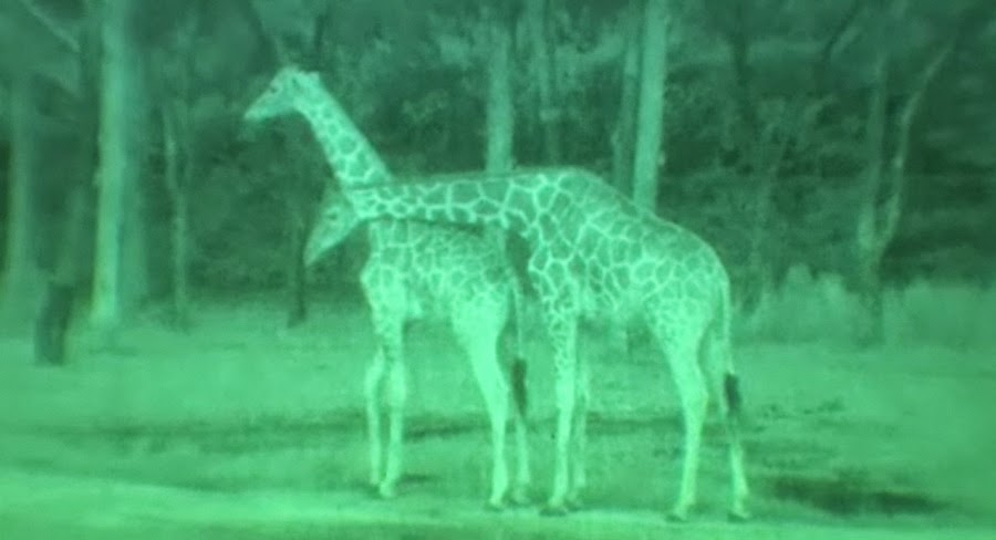 best night vision for wildlife viewing