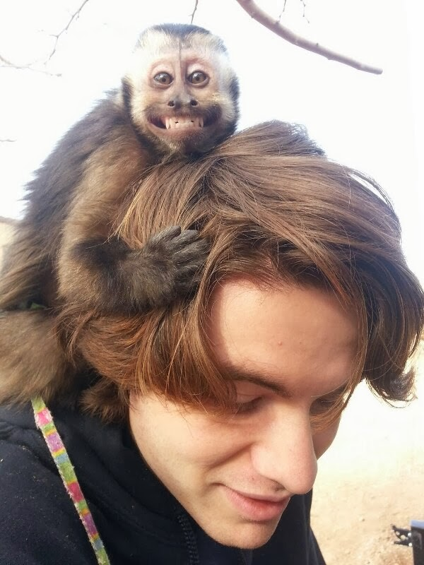 Funny animals of the week - 21 February 2014 (40 pics), grinning monkey hugs guy's head