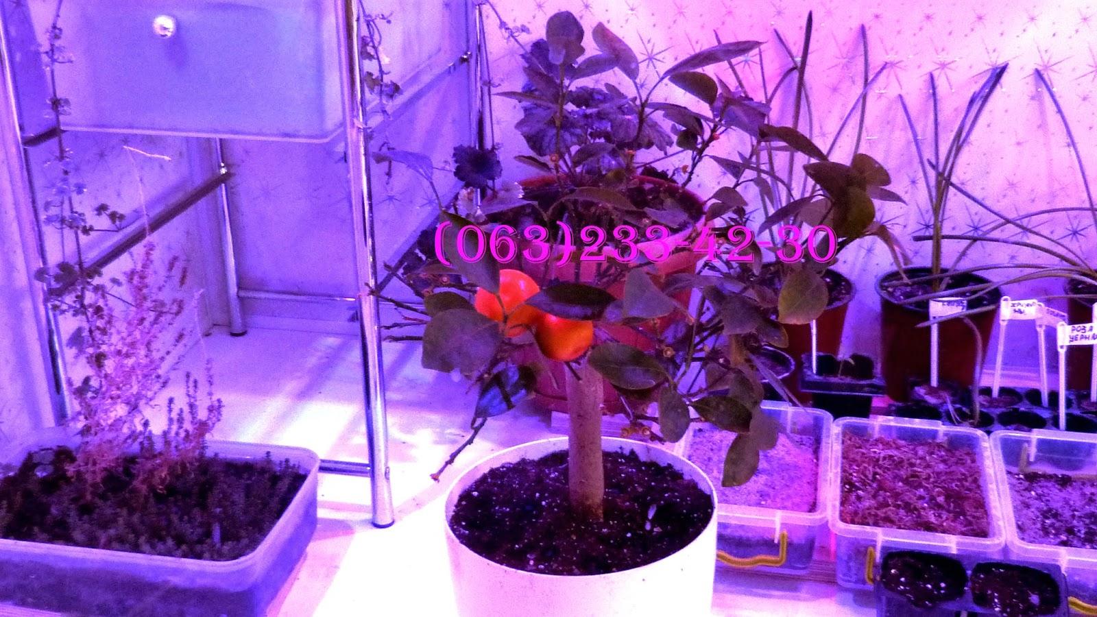 Лампа для домашнего выращивания растений 33
