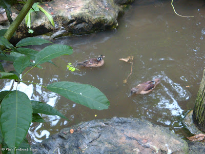 Jurong Bird Park Random Photo 9